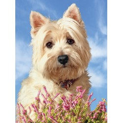Large Westie Picture 3D Westie Wall Art- West Highland White Terrier