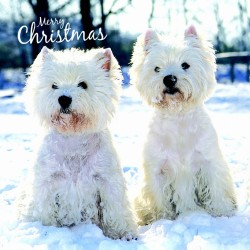 Westie Charity Christmas Cards Pack of 10