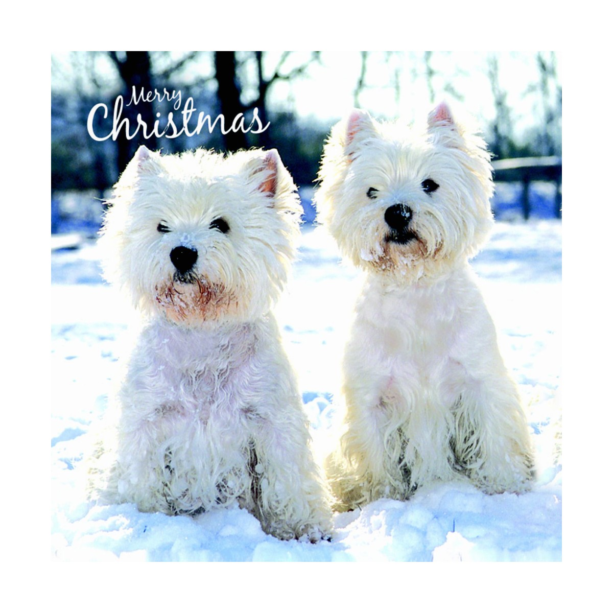 Westie Christmas Cards | white West highland terrier Christmas cards
