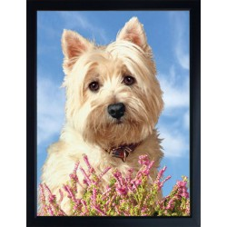 3D Westie Fridge Magnet - West Highland White Terrier