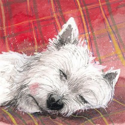 Westie Tartan Rug Greetings Card by Alex Clark