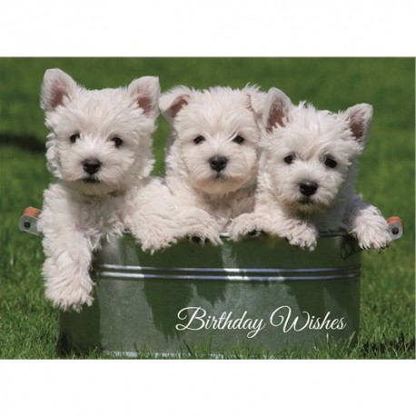 Westie Puppies Birthday Card West Highland Terrier Greeting Card