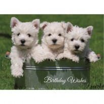 Birthday Card Westie Puppies