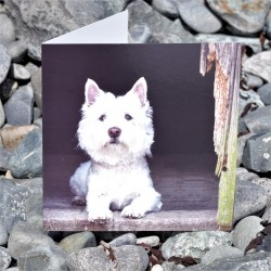 Country Westie Card
