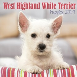 2019 West Highland White Terrier Puppies Mini Wall Calendar