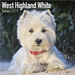 2019 West Highland White Terrier Wall Calendar