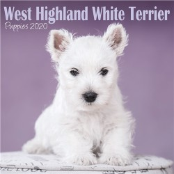2020 West Highland White Terrier Puppies Mini Wall Calendar