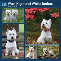 365 Days Of West Highland White Terrier 2020 Wall Calendar