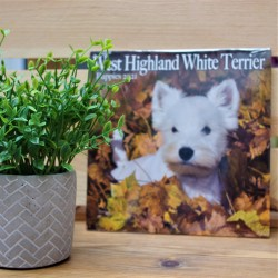 2021 West Highland White Terrier Puppies Mini Wall Calendar